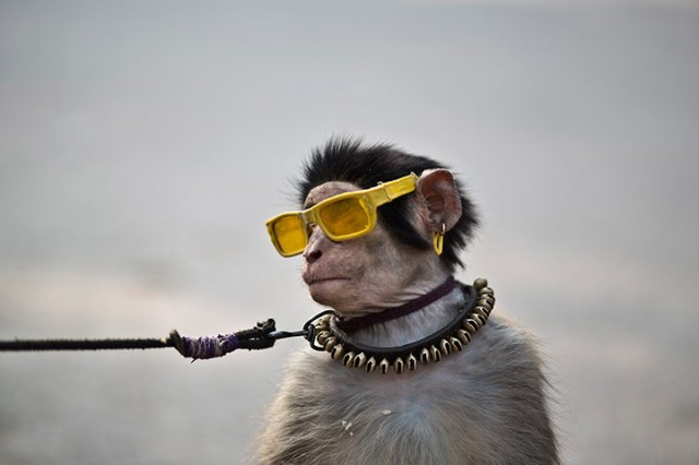 A trained monkey sits next to his owner as they wait for customers
