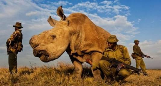 white-rhino-650-800x426