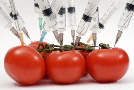 genetika-tropopoiimena-ntomates