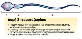 datauri-file (7)