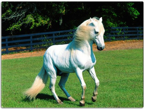 white-horse-garden-fairy-tales